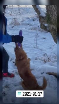 Dėl šuns gaišenos informacijai 3